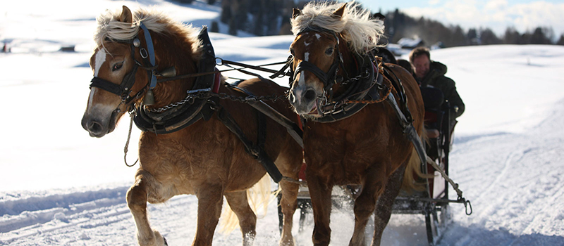 horse-sleigh-4