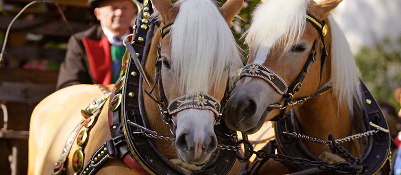 horse-sleight-1