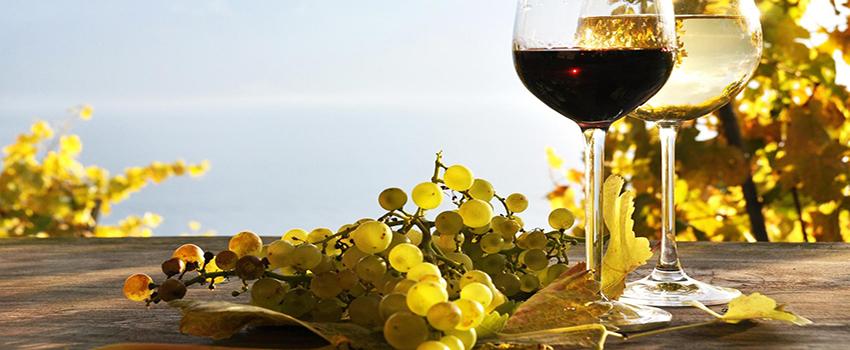 wine road grapes