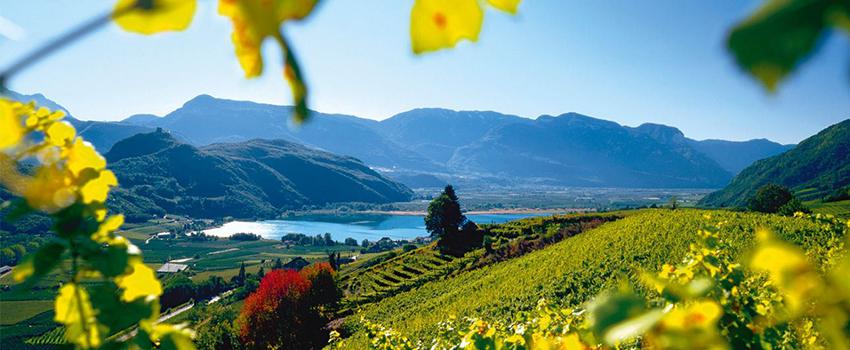 wine-road-caldaro-lake